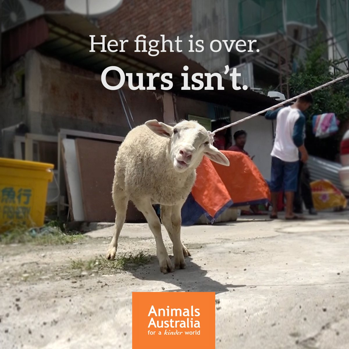 Sign #Petition Please Help #Australia to #BanLiveExport .@AnimalsAus  http://www. animalsaustralia.org/take_action/pe titions/ban-live-export/ &nbsp; … <br>http://pic.twitter.com/B2qrt9Z32E