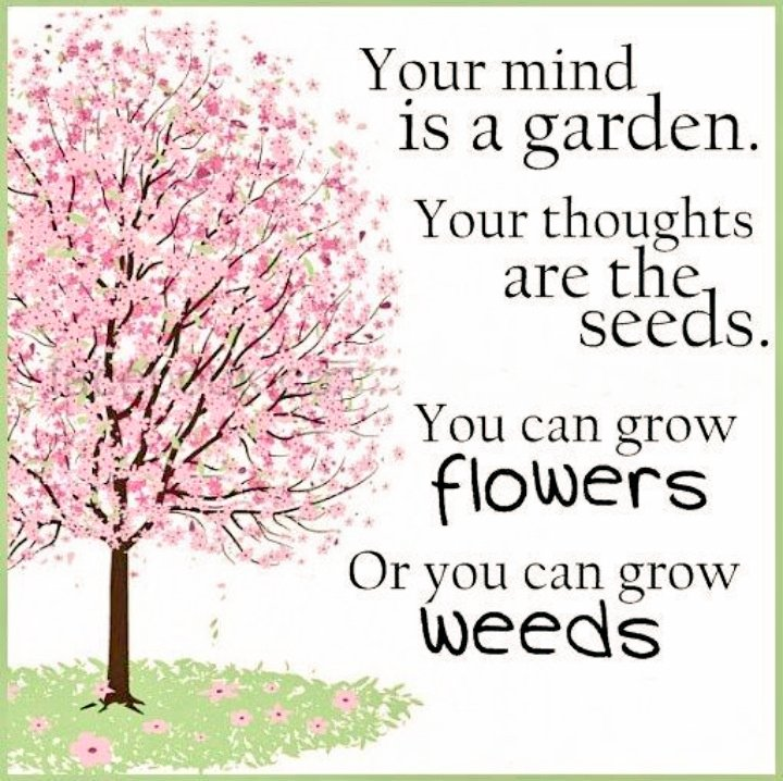 It&#39;s our own decision &amp; our own way, isn&#39;t it?  #mind #Seeds #flowers #weed<br>http://pic.twitter.com/WpxKiae6UO