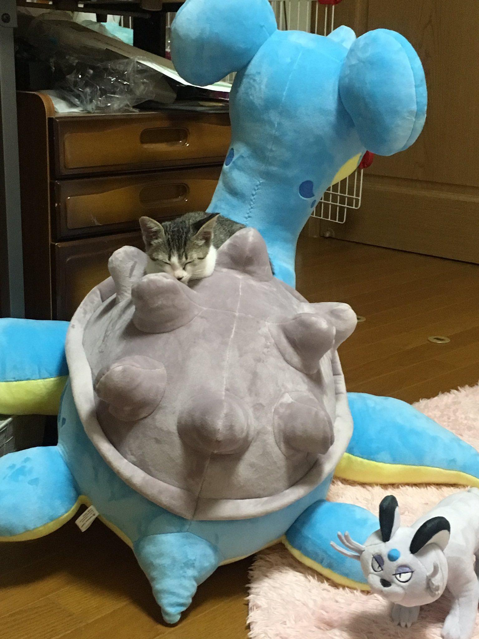 大きな大きなラプラスのぬいぐるみに一番喜んでいるのはまさかの猫ww