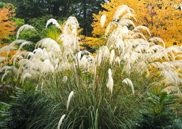 Renowned plant collector and horticulturalist Dan Hinkley picks his favourite plants for autumn  http:// bit.ly/2dHS6sg  &nbsp;   #plants #autumn<br>http://pic.twitter.com/KqHUnJhGbk