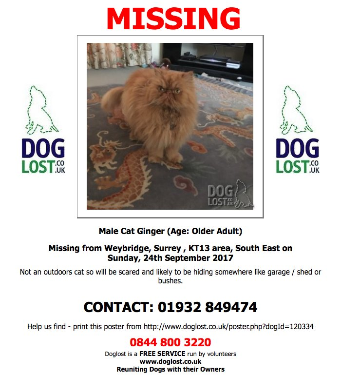#Lost Male #Cat #Weybridge #Surrey #KT13 #Lostcat  http://www. doglost.co.uk/dog-blog.php?d ogId=120334#.Wcqbc9OGNYc &nbsp; … <br>http://pic.twitter.com/qXU5pbkdG8