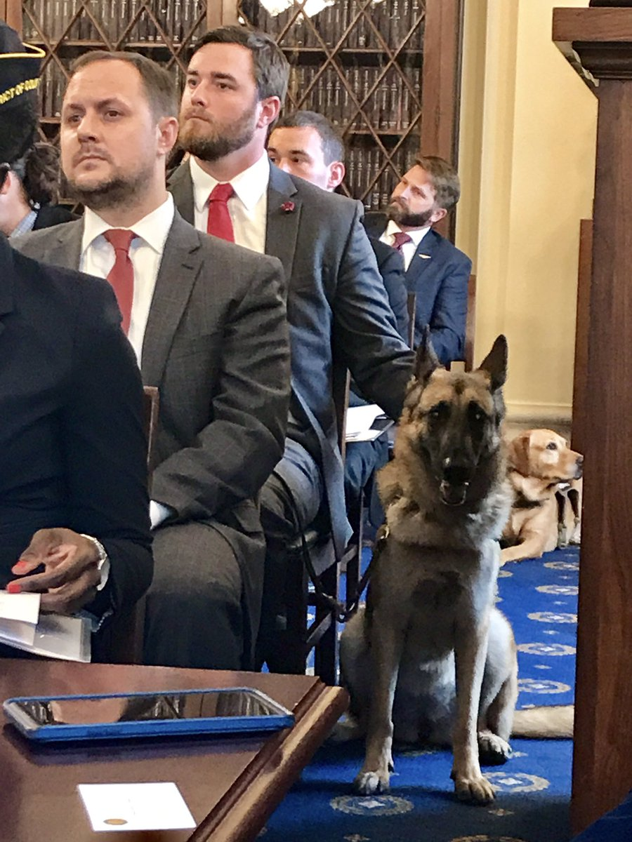 Hearing room filled w service dogs as House Subcmte on #Veterans Health discusses bill that would give trained dogs to vets w #PTSD. @wusa9<br>http://pic.twitter.com/yN9wEK6e7m