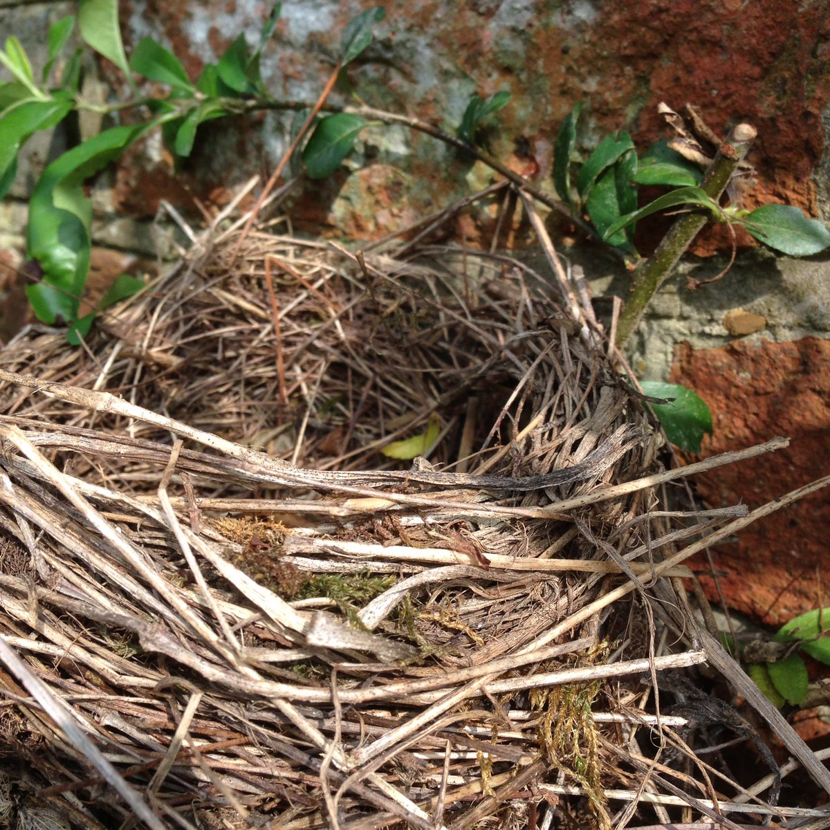 Nice things found while doing the ramblers. Nest in use for five years now.  #pruning #roses #nests #gardenbirds #recycle <br>http://pic.twitter.com/F8Bbe9e5Vv