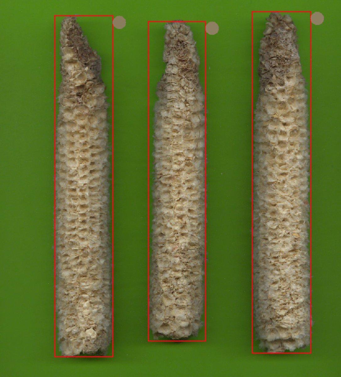 Plant Image Analysis on Twitter: