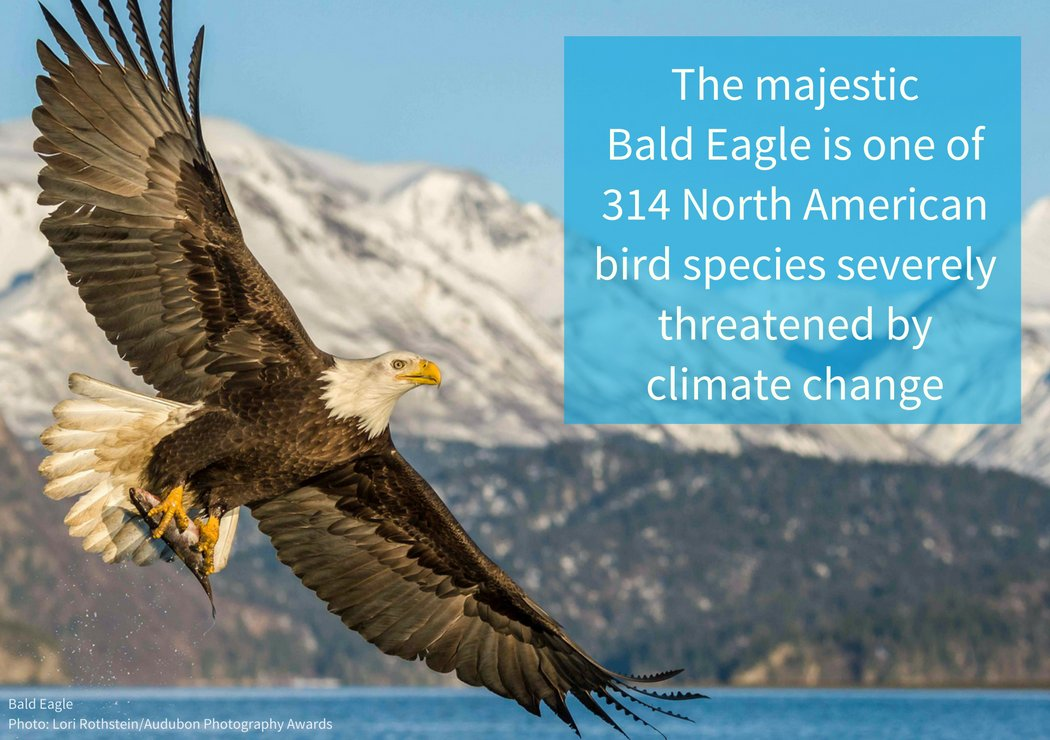 Audubon Society On Twitter We Saved The Bald Eagle Once Now Our