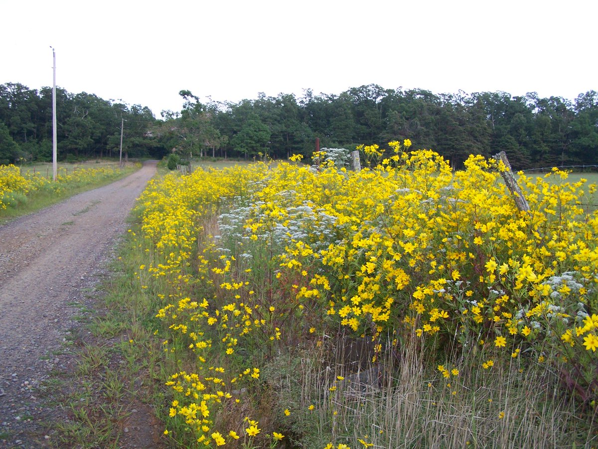 "MulberryRiverJournal on Twitter: ""Wildflowers in the Hay Field. #Rural # Arkansas #Flowers #Outdoors #Roadtrip… """