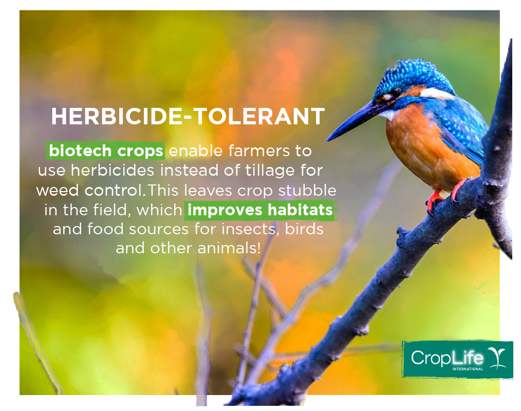 a description of herbicide tolerant crops by patrick donahoe Title: brentwood press_102111, author: brentwood press but according to postmaster general patrick donahoe in any frame up to $130 scratch-resistant.