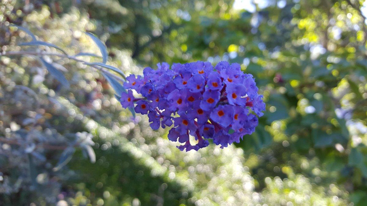 Usar púrpura en el jardín + mis diez flores púrpuras superiores