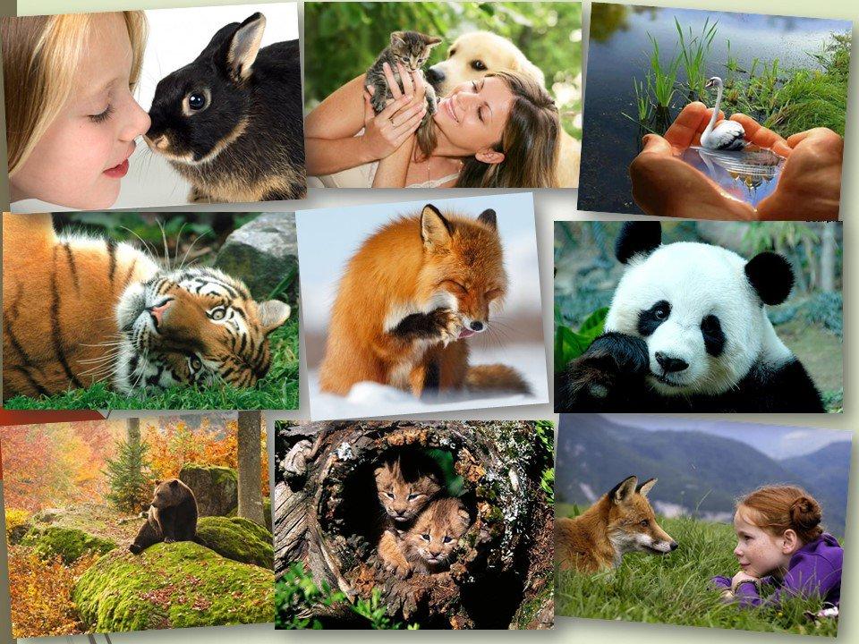 Фоны картинки, картинки ко дню защиты животных