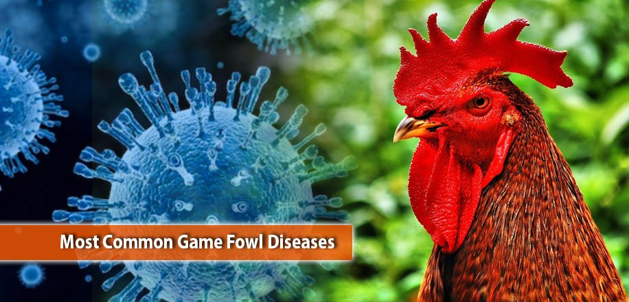 chickendiseases hashtag on Twitter