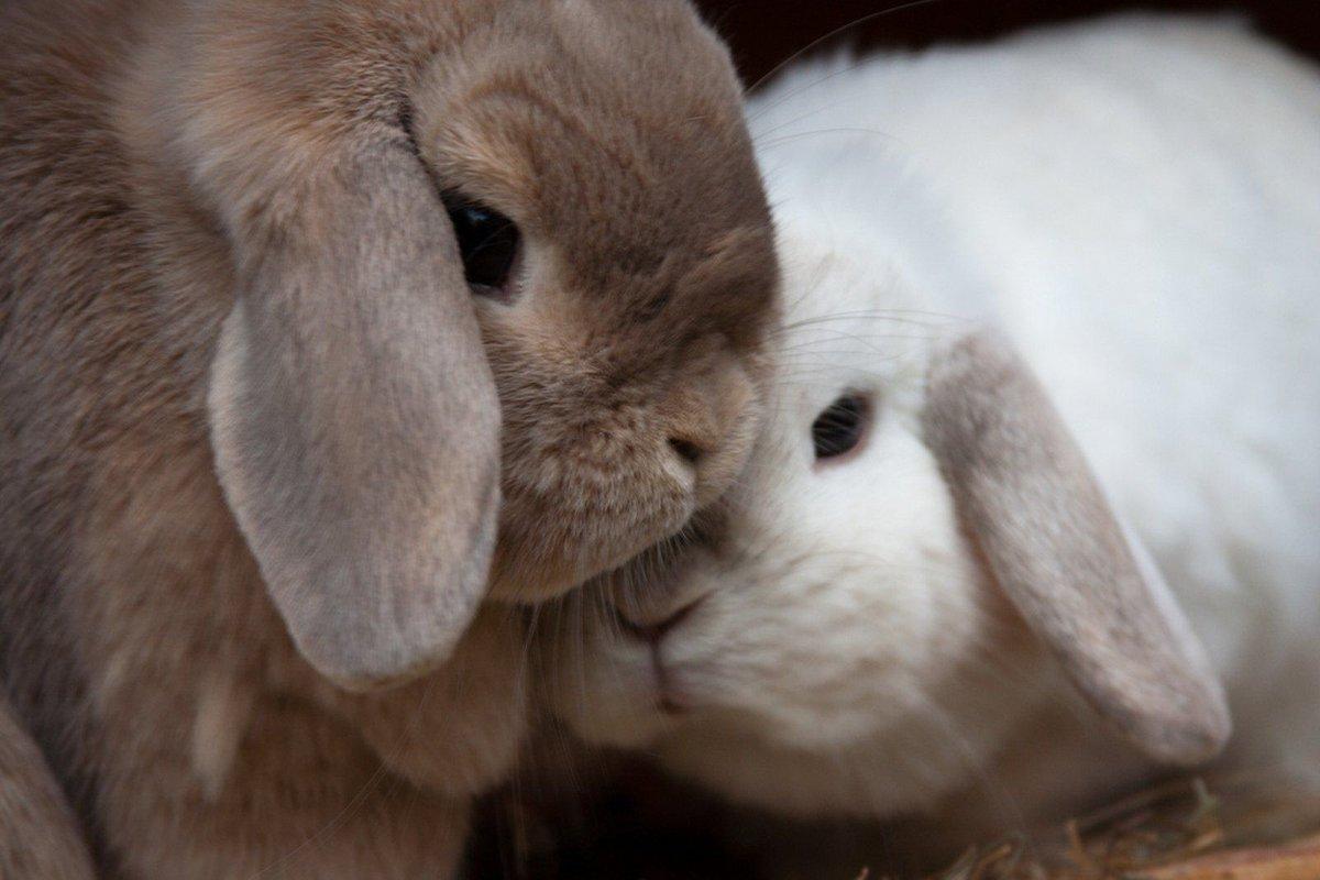 расскажет пара заек картинки поговорим