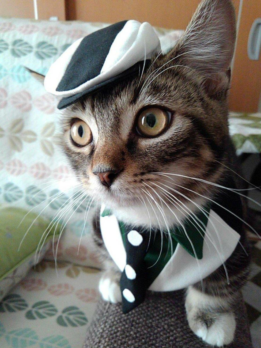 ちなみに、妹が猫用のスタイを作るんで平均を聞いて見たかったのです。 首周り、成猫でどのくらいなのかな〜と