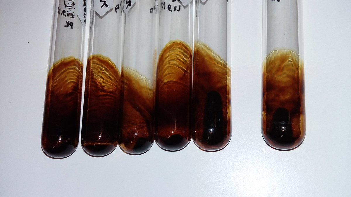Some people do art with oil paints. I do art with oil #research #LaboratoryFun pic.twitter.com/2WiszJmu9W