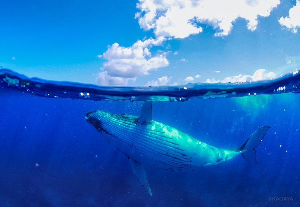 タッチ・ザ・スカイ クジラは海も人も空も見て歌を歌う。 (昨日タヒチの離島にて撮影)