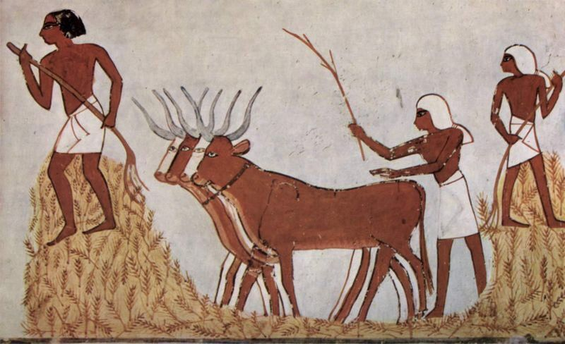 Farmers with wheat and cattle - Ancient...