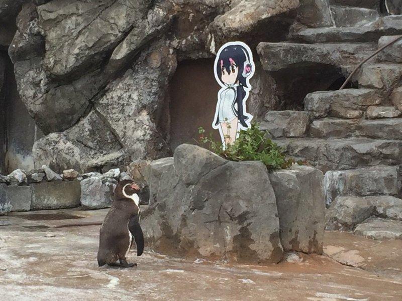 【訃報】東武動物公園のペンギン・グレープ君が亡くなる 大好きな「けもフレ」フルルが最後まで見守る B…