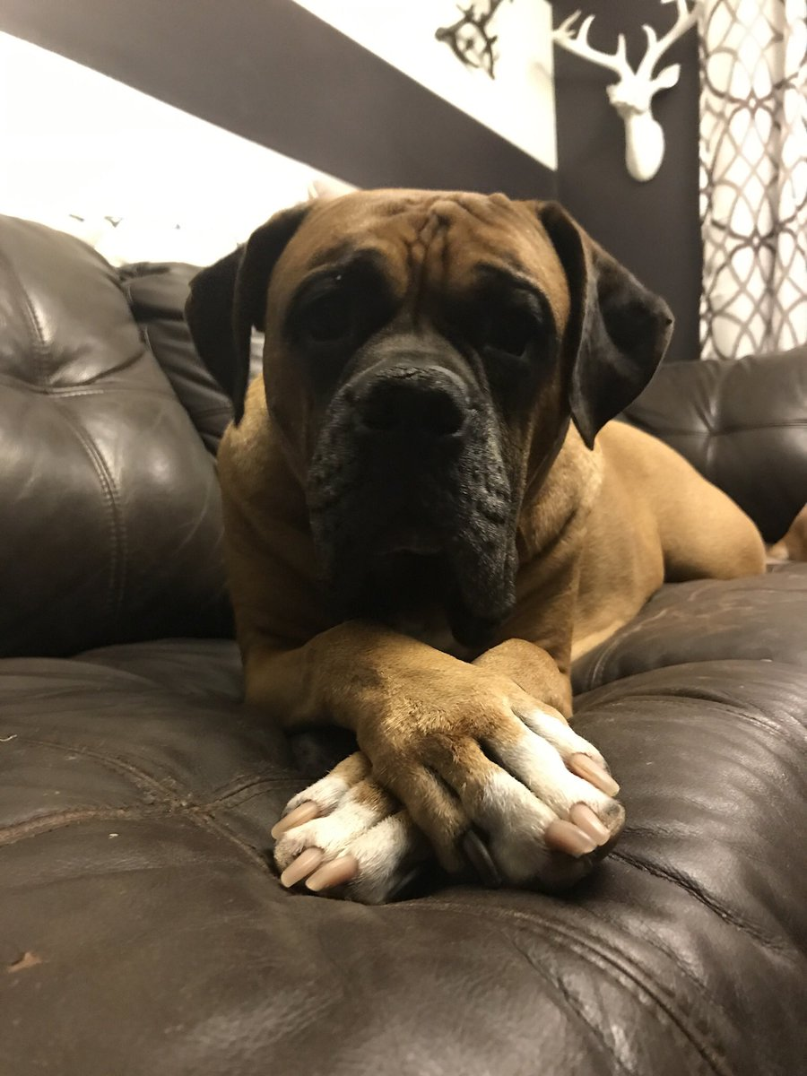 Well hello there #boxers #boxerdogs<br>http://pic.twitter.com/038oTbUVMD
