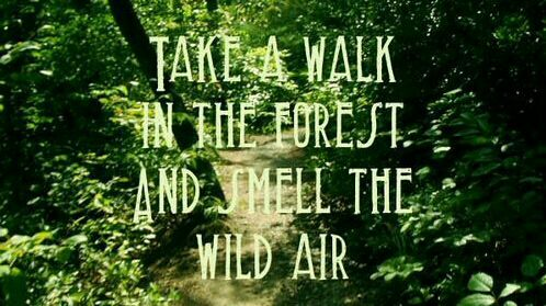 Good Life Quotes On Twitter Take A Walk In The Forest And Smell