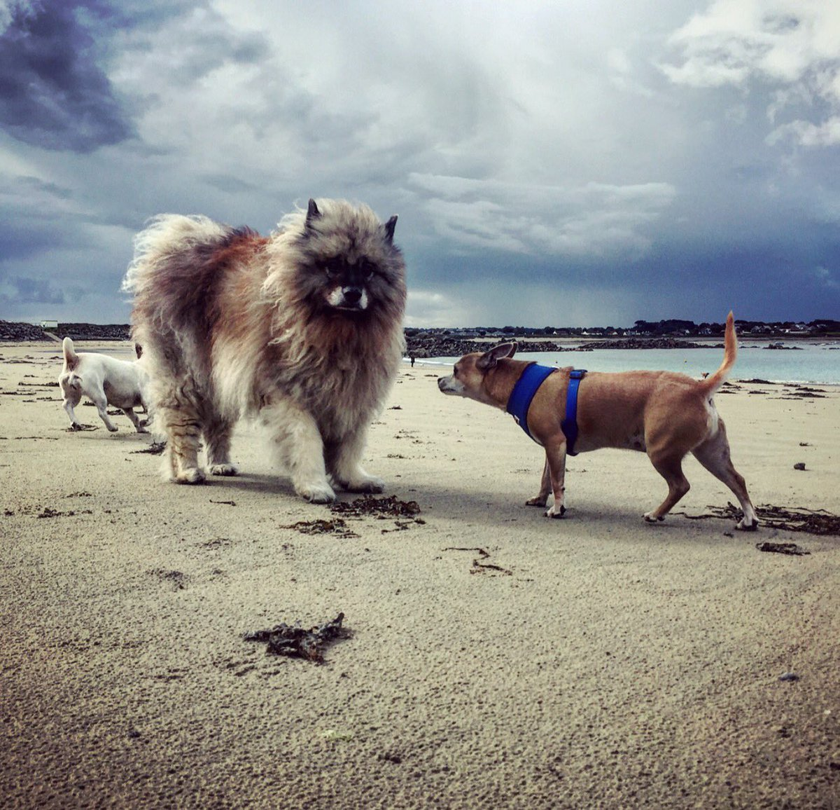 I had so much fun down the beach with Ellie today. I wasn't sure on this friend though, he was very hairy #dogsoftwitter #hairyfriend pic.twitter.com/Z3Ot8QSD7u