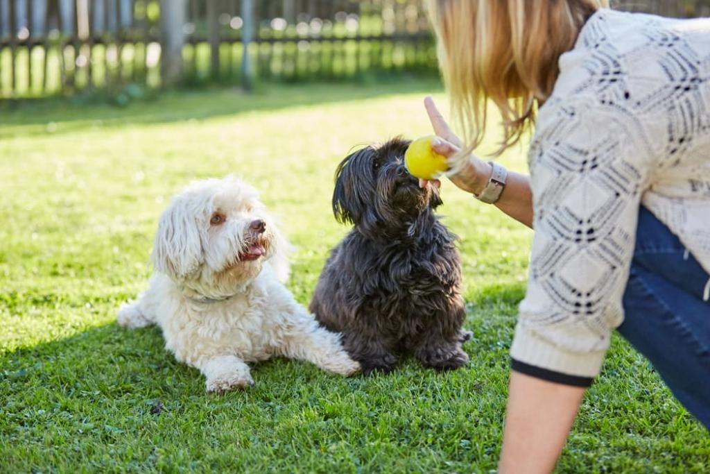 Behavior Cues Every #Dog Needs to Know - @DogingtonPost #dogtraining #dogbehavior  https:// buff.ly/2yacChn  &nbsp;  <br>http://pic.twitter.com/K4P2dz27NM