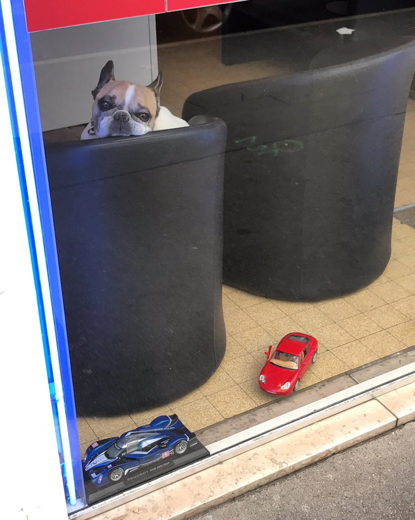 Here is a picture of a bored French dog sitting in the reception area of a French driving school #ennui <br>http://pic.twitter.com/mYcGUm6kDT
