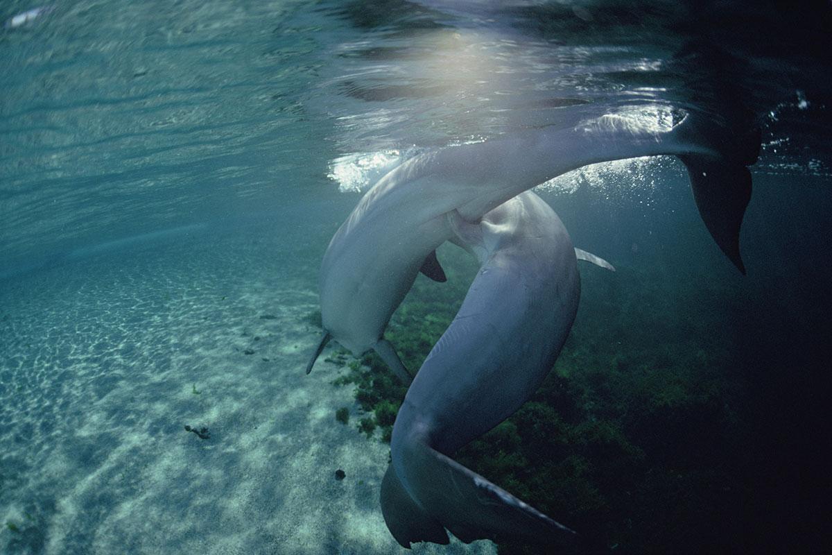 Homosexuality In Marine Mammals