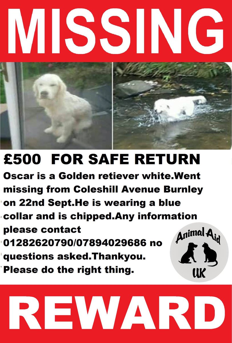 #MISSING OSCAR PLS RT &amp; #findOscar white #goldenretriever #ColeshillAve #Burnley 22/9 wearing blue collar #chipped #Lancashire  £500 <br>http://pic.twitter.com/PmgJ1L67Ab