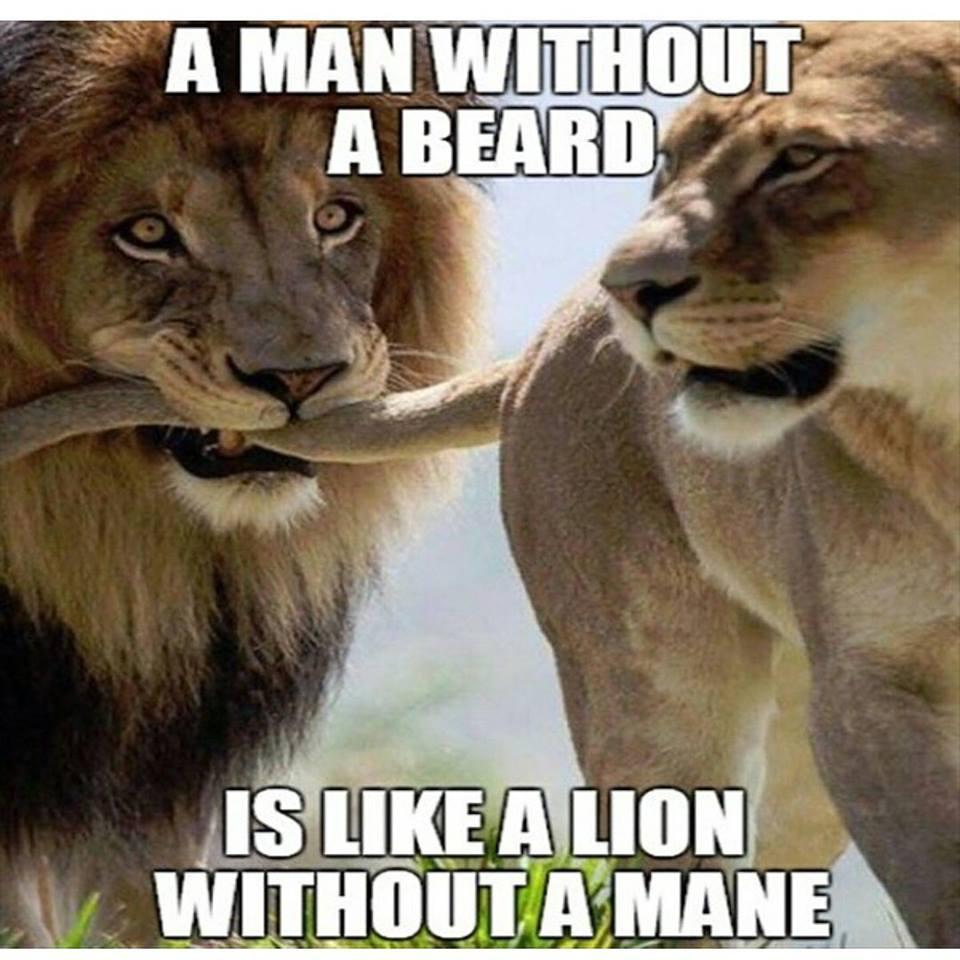 Be a Lion.    #beard #beards #bearded #beardlovers<br>http://pic.twitter.com/VGIkBbqI8L