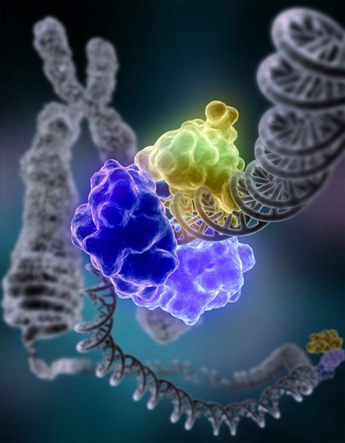 Over time, chronic inflammation can cause DNA damage and lead to cancer:  https://www. cancer.gov/about-cancer/c auses-prevention/risk/chronic-inflammation &nbsp; …  Image: NIGMS/Tom Ellenberger #basicresearch <br>http://pic.twitter.com/StG3XwCNCP