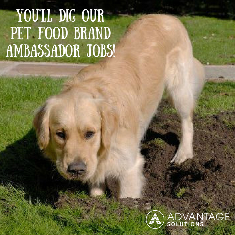 Advantage Solutions Careers On Twitter Do You Have A Passion For Pets Then You Will Absolutely Dig Our Pet Food Brandambassador Jobs Apply Today Https T Co Uy4yfzuksy Https T Co Bvmij3na7g Miss dig 811 is a free safety notification system in michigan that safeguards utility facilities before excavation projects begin. twitter