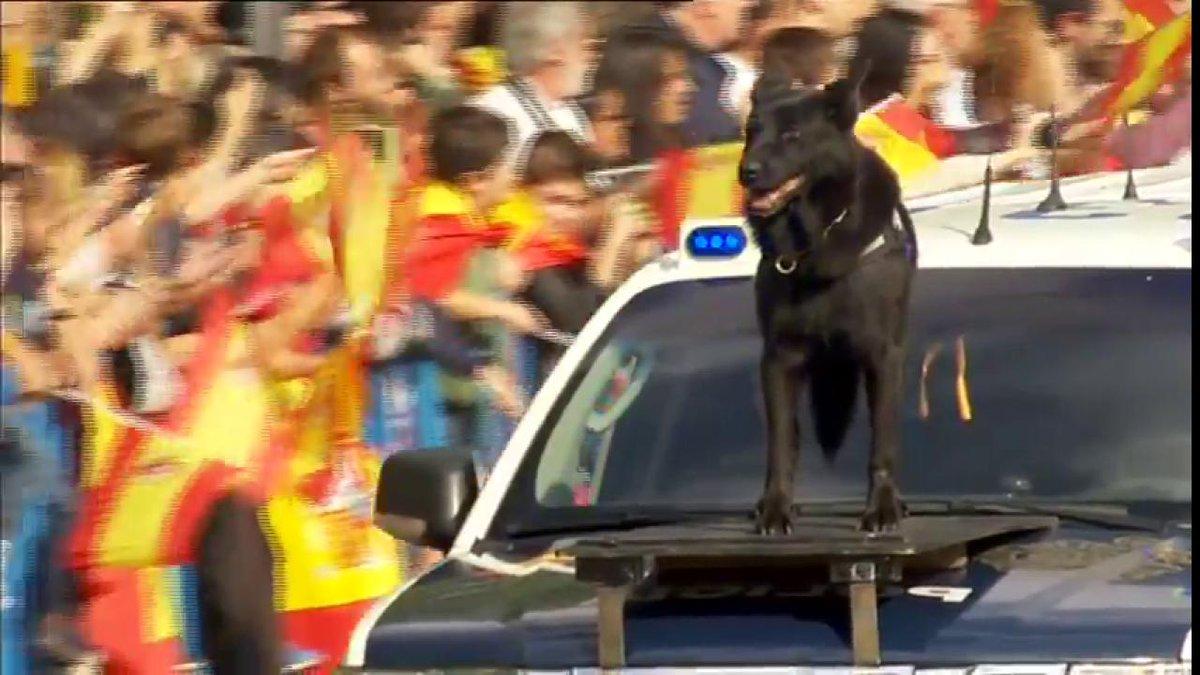 Así va el perro de la policía en el desf...