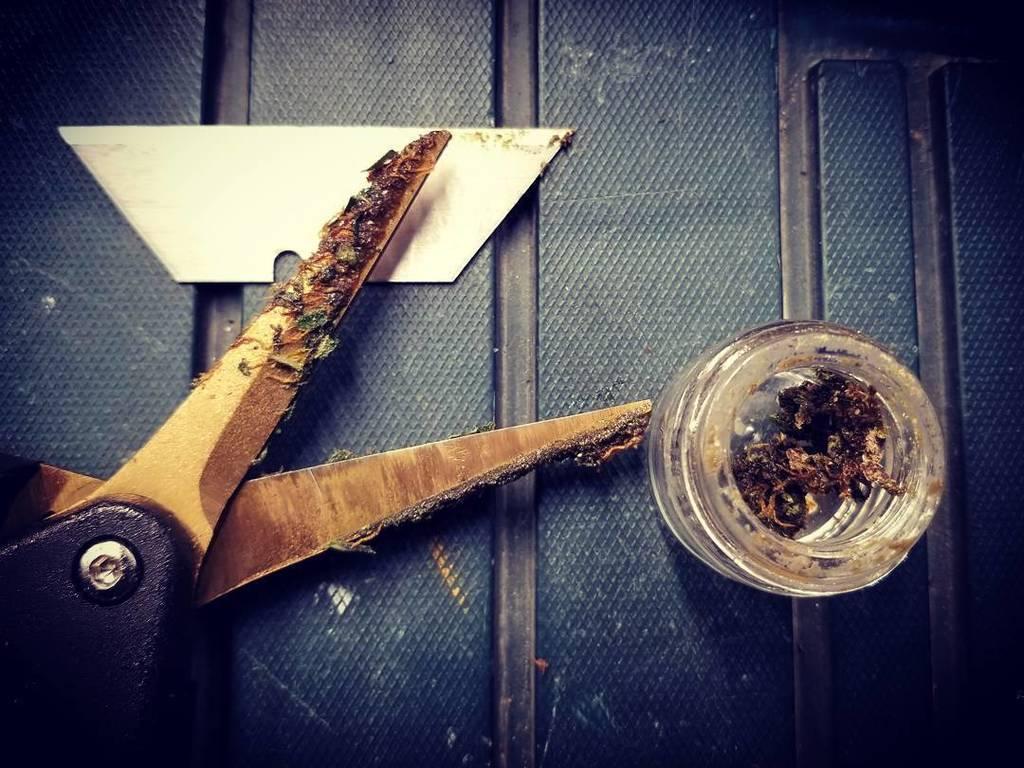 Who else loves scissor hash?  . #charas #hash #harvest #mrniceusa #bestoftheday #critcalmass #scissorhash #MRNICE #hashish #handmade #c…<br>http://pic.twitter.com/xFd4FzTLpq