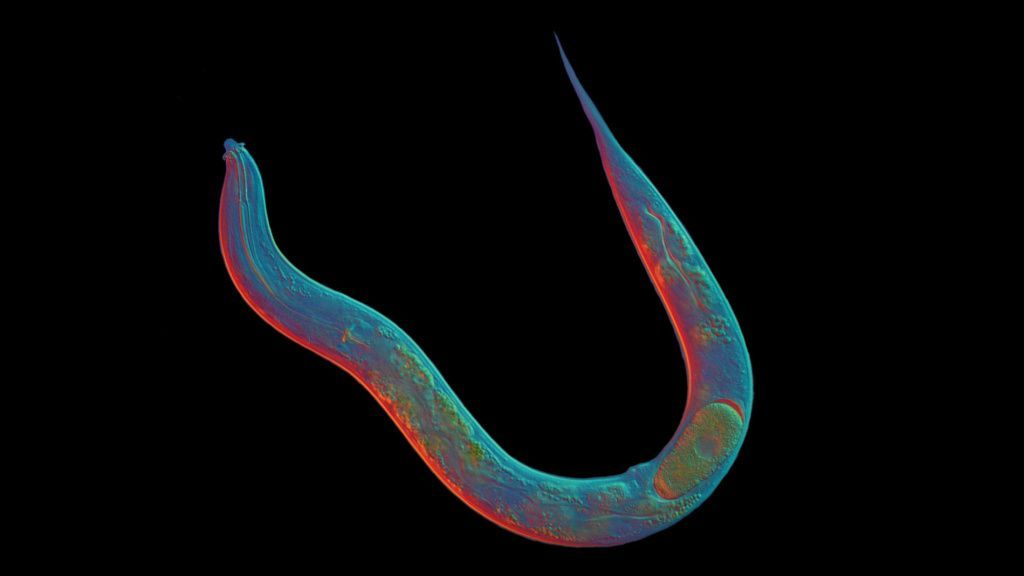 This tiny worm hasn't had sex in 18 million years. How does it survive? https://t.co/t9ndvJyI4Y https://t.co/mjd3TvJ0Ai