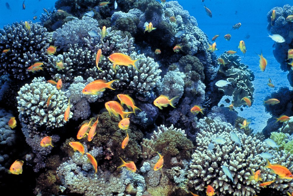 A5: Ecosystem services are essential. Coral reefs support biodiversity + help protect people from storm surge. #ConservationAdaptation <br>http://pic.twitter.com/lKq8C8R60Q