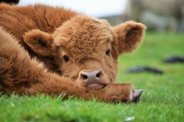 Go out and kiss a cow!!! 😘  #NationalFar...