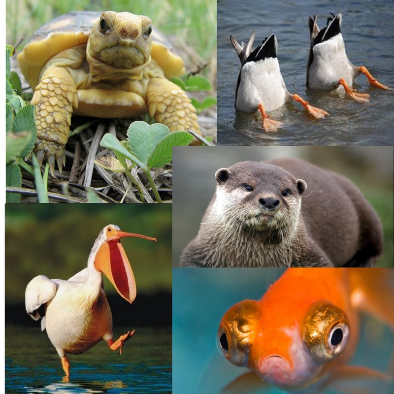 So we asked some of our wildlife friends what a day without water would mean to them. Here are some of their reactions #txwater #valuewater <br>http://pic.twitter.com/vjUhNIZdyf