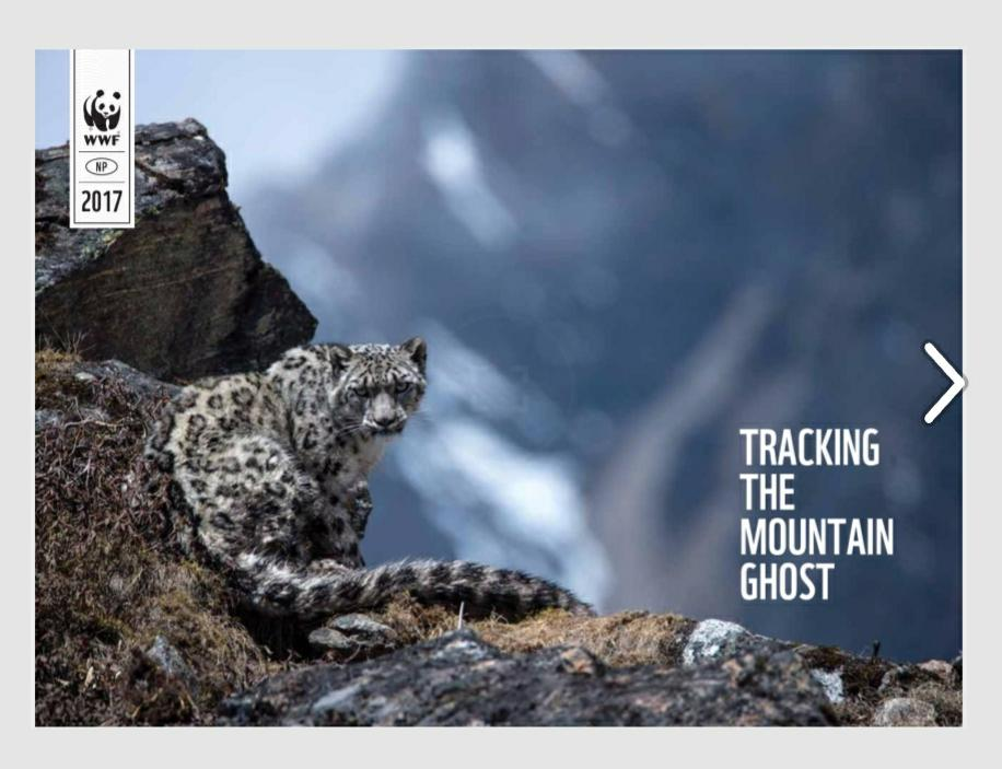 Learn more about Nepal&#39;s initiatives and challenges in #snowleopard  conservation  http://www. wwfnepal.org/media_room/pub lications/?uNewsID=309111 &nbsp; …  #ConservationAdaptation <br>http://pic.twitter.com/nwrKNFHE4P