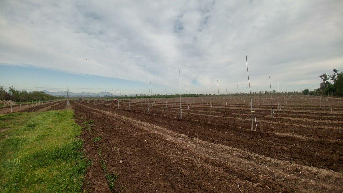 #CentralCintac, se adapta a diferentes métodos de cultivo, gracias a sus diferentes patrones de perforación - https://hubs.ly/H08TYCb0