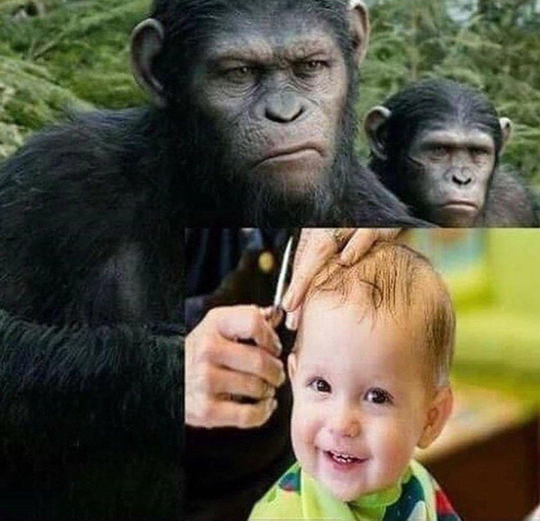 картинка с тремя обезьянами мем договору