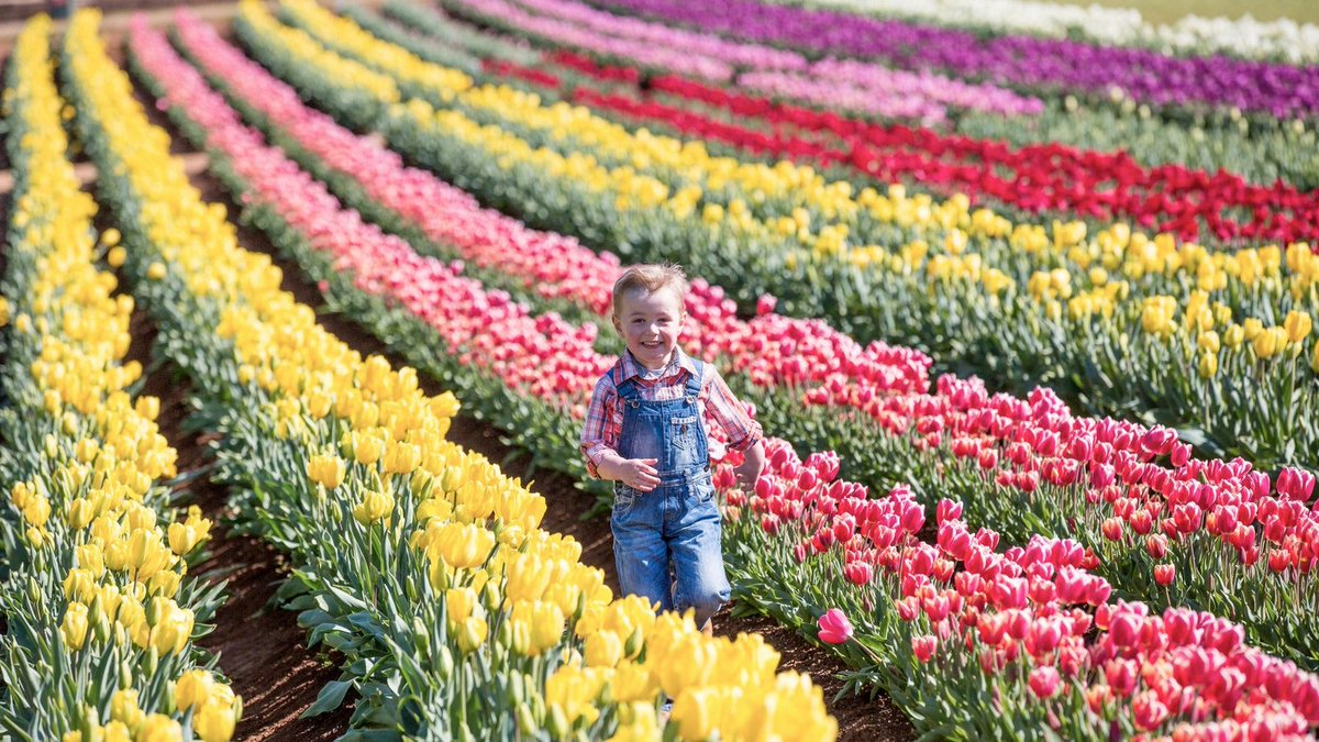 informative speech tulip festival About me hi and nice to meet you welcome to my blog this blog talks about my experiences as a mom and my life in between you will also see posts about food and our family travels.