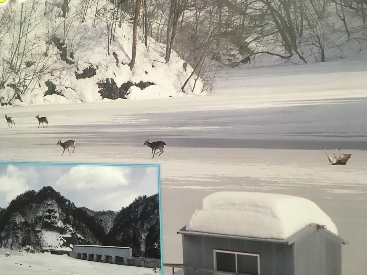 川俣ダム資料館には転んだシカの写真が展示されてたw ナイス転びっぷり。 https://t.co/xjTBB6qvrM