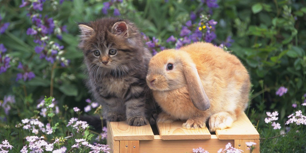 Картинки про зайцев и котов, марта день