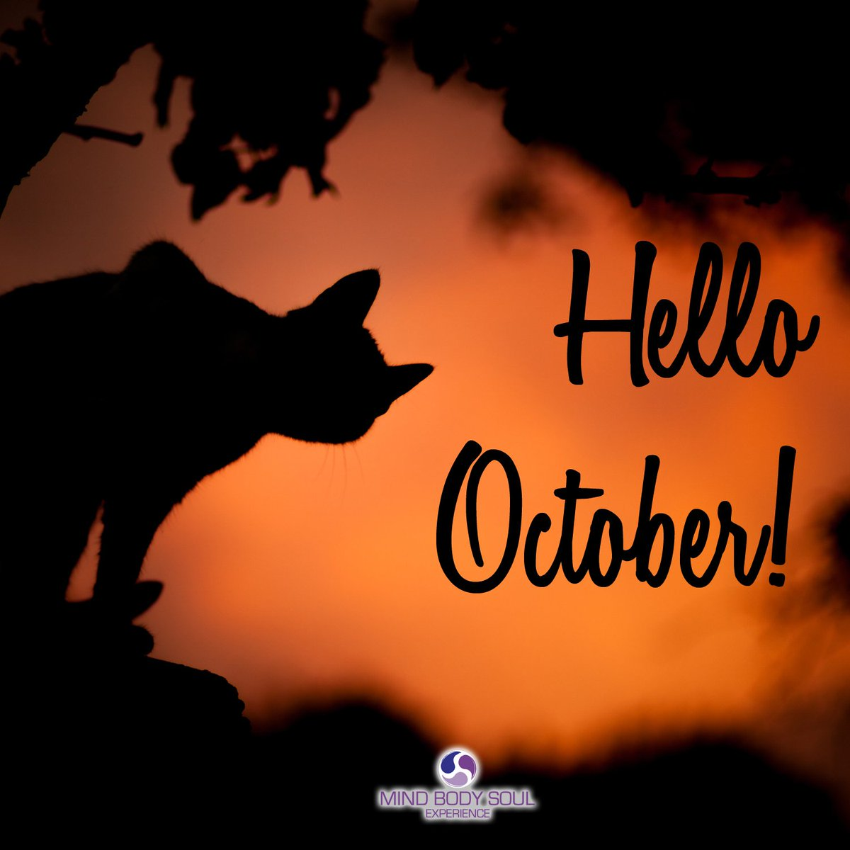 Image result for october cat
