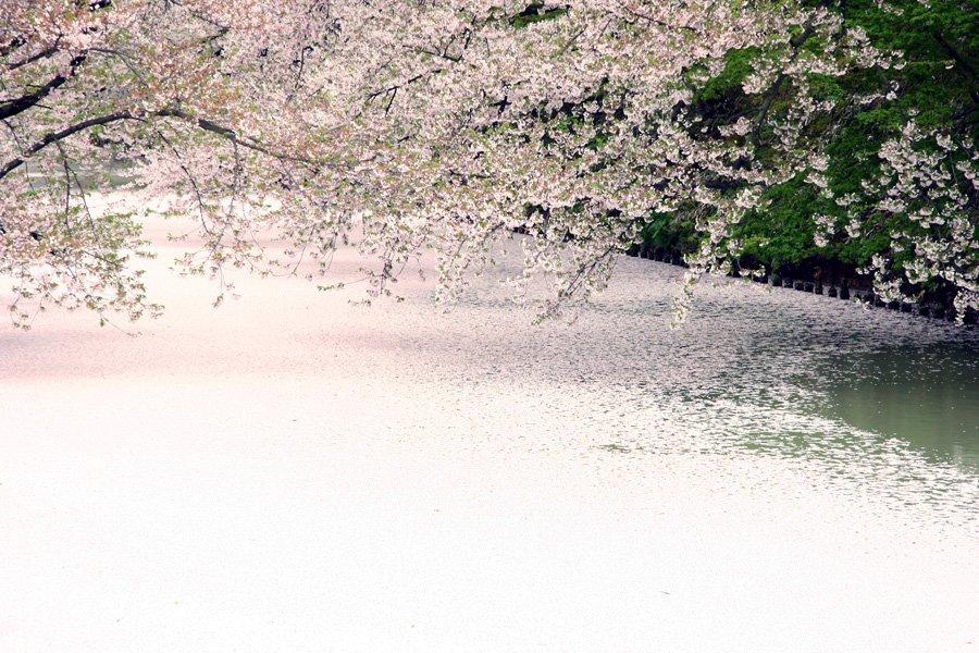 【#弘前さんぽ】♪ 本日は、母カメラフォルダーを散歩して集めてきました(*^^*) 思い出の弘前四季です😍 春・夏・秋・冬 ビートまりおの「林檎華憐歌」の世界です♬~