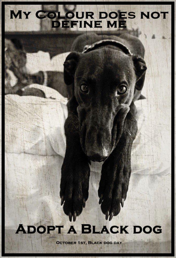 Afbeeldingsresultaat voor i love black dogs