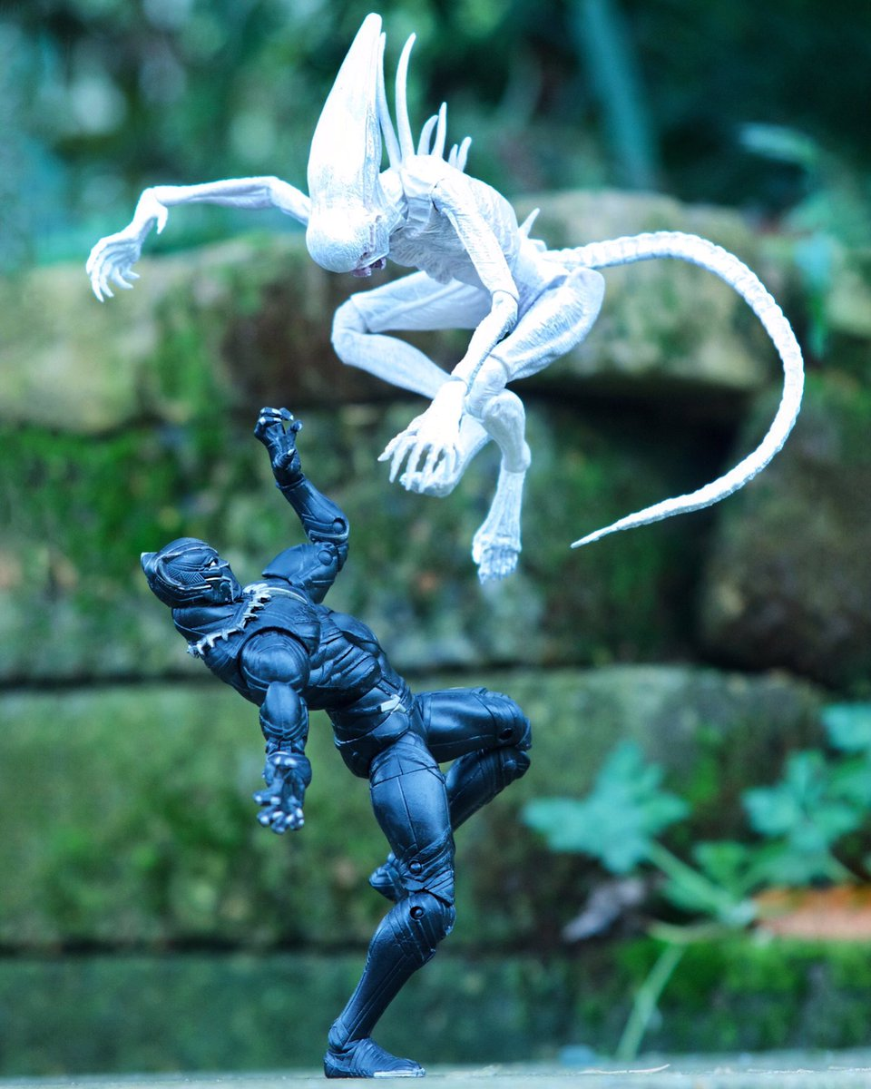 #BlackPanther ambushed by #Neomorph  Which you prefer warm or cold? <br>http://pic.twitter.com/cDrZxBdWXU