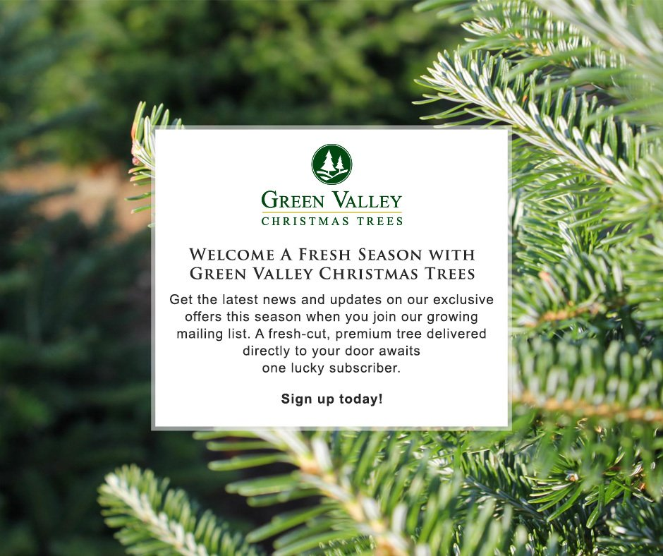 green valley trees on twitter sign up on our mailing list and get a chance to win a premium green valley christmas tree by joining our giveaway