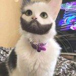 そんな模様有り得る?猫の顔の模様が山田孝之の髭と同じ!
