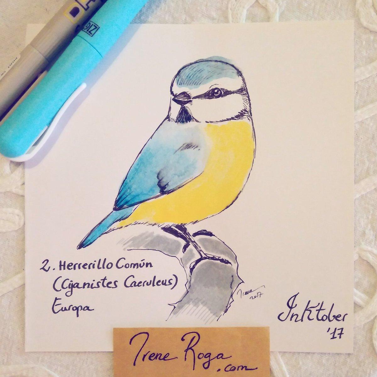 #Inktober day 2: Blue Tit  #inktober2017 #inktoberday2 #inktober17 #birdies https://t.co/RQyJvk9JCR