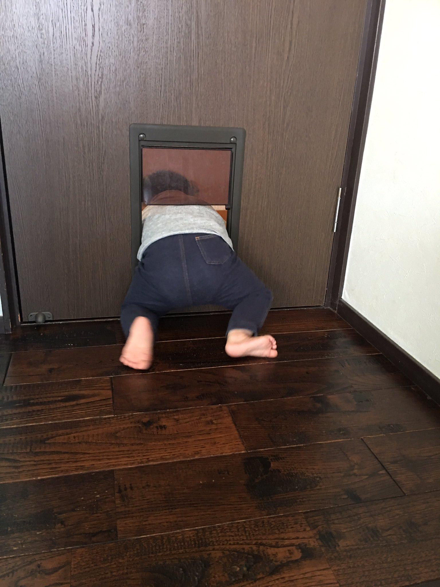 犬や猫だけとが限らないwペット専用ドアは幼児兼用ドアであるwww